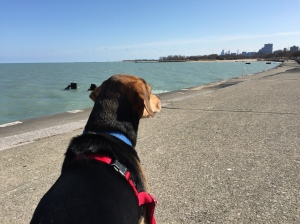 Enjoying my new freedom in the daytime hours with a walk to Lake Michigan with my dog, Mack.