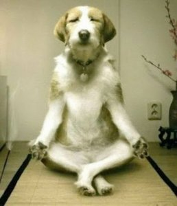 This meditative dog could teach me a thing or two about fulfillment.